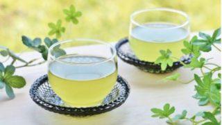 水出し緑茶 水道水